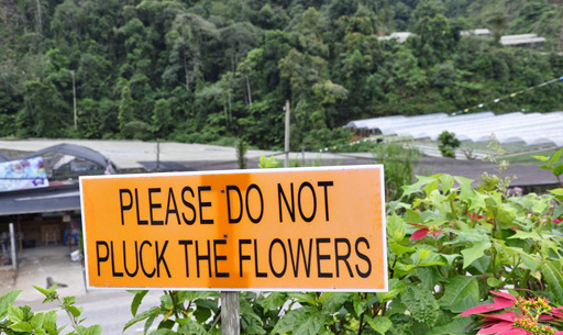 please do not pluck the flowers